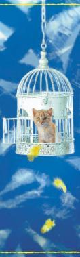Kitten in Birdcage