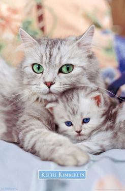 KITTEN - MOMMA
