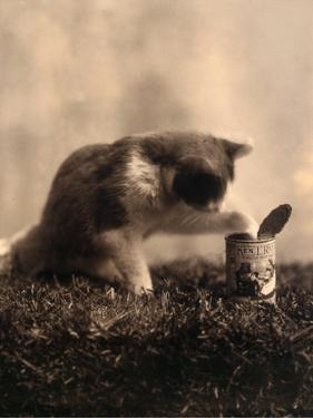 Kitten Playing with Canned Food