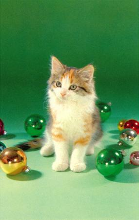 Kitten with Christmas Bulbs, Retro