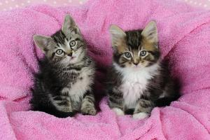 Kittens on Pink Towel