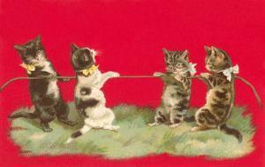 Kittens Playing Tug of War