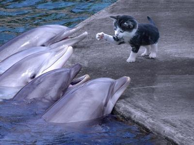 https://imgc.allpostersimages.com/img/posters/kittykitty_u-L-Q1CQHXA0.jpg?artPerspective=n