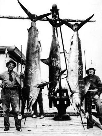 Kiwi Swordfish Catch