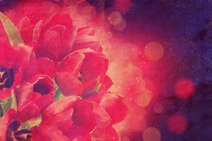Red Tulips Photo with a Vintage Effect by kjpargeter