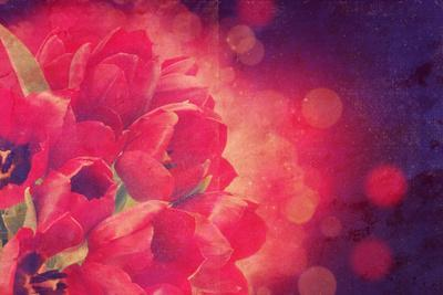 Red Tulips Photo with a Vintage Effect