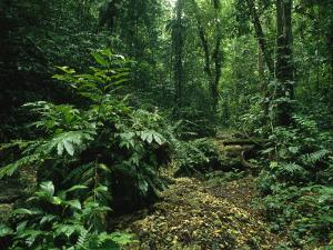 Lush Woodland View in Papua New Guinea by Klaus Nigge
