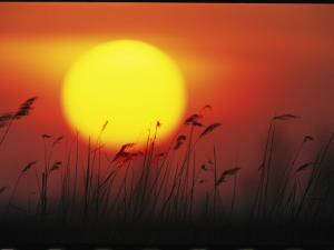Sunset and Tall Grasses by Klaus Nigge