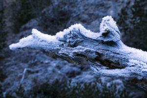Hoarfrost on Dead Wood by Klaus Scholz