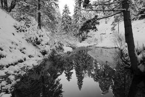 Pond in the Winter Forest by Klaus Scholz