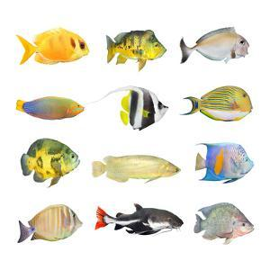 Great Collection of a Tropical Fish on a White Background. by Kletr