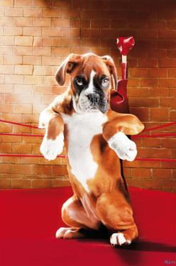Knock Out (Boxer Puppy in Ring) Art Poster Print