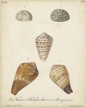 Antique Knorr Shells I by Knorr