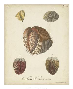 Antique Knorr Shells II by Knorr