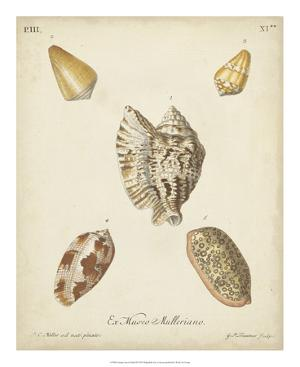 Antique Knorr Shells III by Knorr