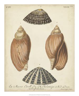 Antique Knorr Shells V by Knorr