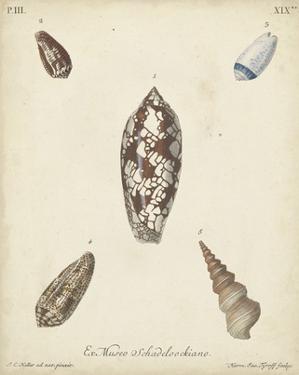 Antique Knorr Shells VII by Knorr