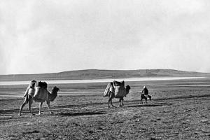 Dromedar-Karawane in der Türkei, 1960er Jahre by Knorr & Hirth