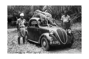 Großwildjäger mit zwei erlegten Tigern, 1939 by Knorr & Hirth