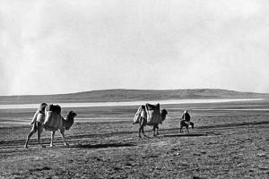 Caravan of Dromedarys in Turkey, 1960s by Knorr Hirth Süddeutsche Zeitung Photo