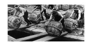 Longshoremen in Tokyo, 1930's by Knorr Hirth Süddeutsche Zeitung Photo