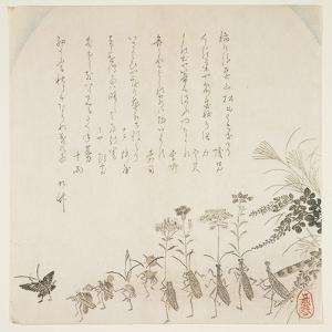 Autumn Flowers and Singing Insects, C.1854-59 by Ko Sukoku II