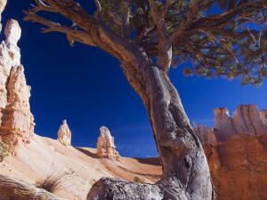Peekaboo Trail in Bryce Canyon National Park, Utah, USA by Kober Christian