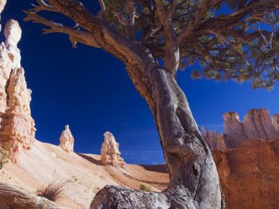 Peekaboo Trail in Bryce Canyon National Park, Utah, USA by Kober Christian