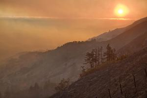 Wildernes after a Wildfire, at Sunset. by Kodiak Greenwood