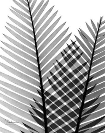 Plant Fronds, X-ray by Koetsier Albert