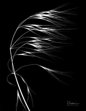 Wild Grass Seed Heads, X-ray by Koetsier Albert