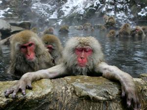 Japan Hot Spa Monkeys by Koji Sasahara