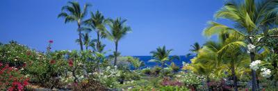 Kona Coast, Hawaii, USA