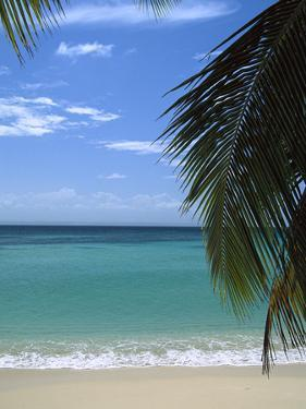 Palm Fronds Frame Bacardi Beach and Lagoon, Dominican Republic, Caribbean by Konrad Wothe