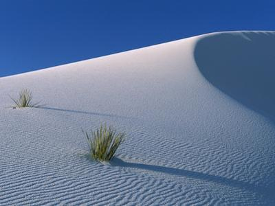 White Dunes in Gypsum Dune Field, White Sands National Monument, New Mexico by Konrad Wothe