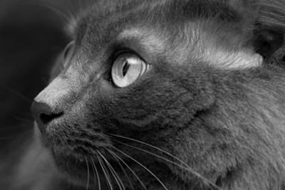 Gray Cat by Konstantin Tvabin