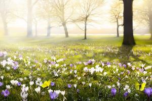 Abstract Sunny Beautiful Spring Background by Konstiantyn