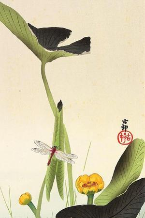 Dragonfly and Lotus