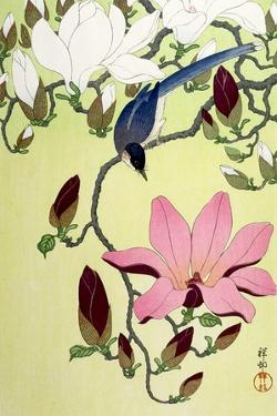 Magpie with Pink and White Magnolia Blossoms by Koson Ohara