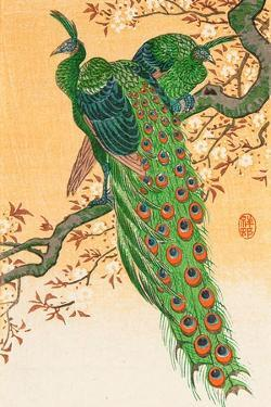Peacock and Peahen on Branch by Koson Ohara