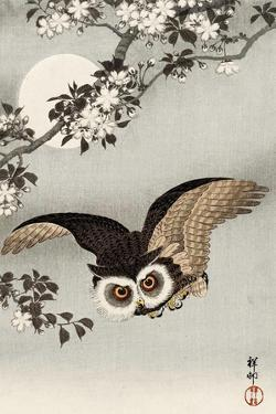Scops Owl Flying under Cherry Blossoms by Koson Ohara