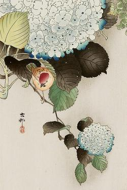 Sparrow on Hydrangea by Koson Ohara