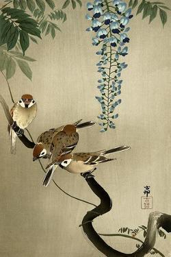 Sparrows and Wisteria by Koson Ohara