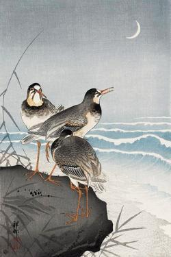 Three Plovers, Waves and Crescent Moon by Koson Ohara