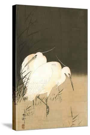 Two Egrets at Night