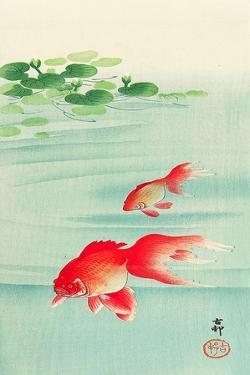 Two Goldfish by Koson Ohara