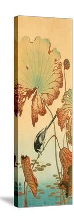 Wagtail and Lotus