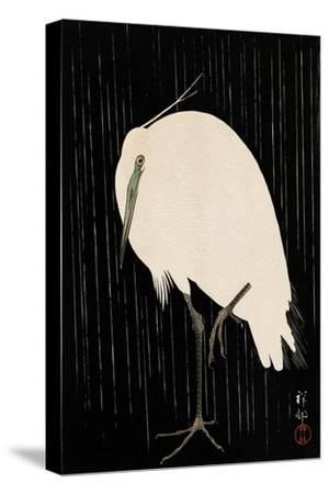White Heron Standing in the Rain