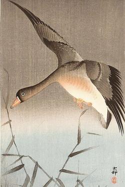 Wild Goose by Koson Ohara