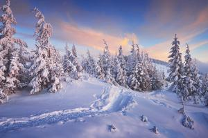 Fir Trees under the Snow. Mountain Forest in Winter. Christmas Landscape. the Path in the Snow. Car by Kotenko